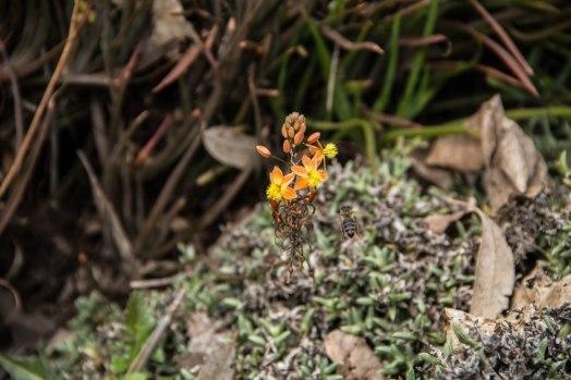 Rocha_4March17_Bontantic Garden 340001
