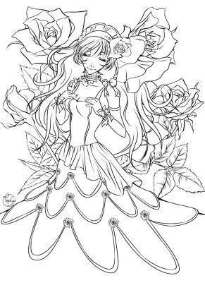 Blooming of rose