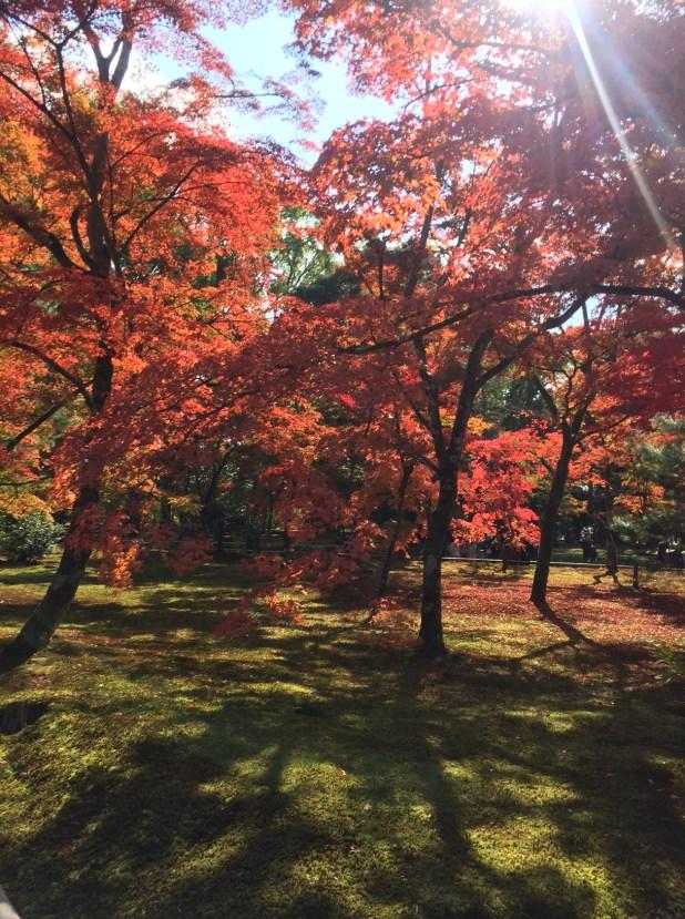 koyo-kyoto-momiji-kinkakuji-rosalys2014-1