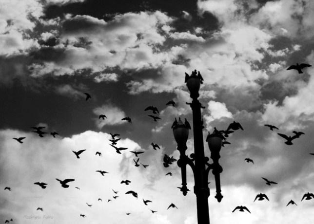 Praça da Sé © Rosângela Fialho Photography