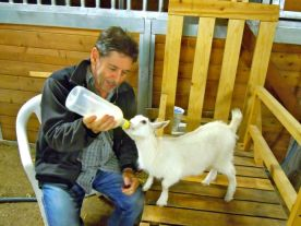 Mr F feeding the baby goat at the farm where we spent the weekend