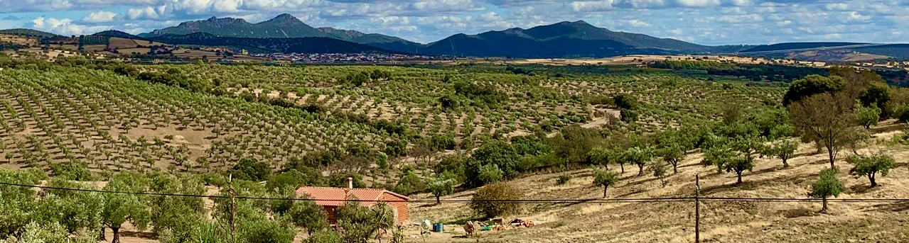 Olivenplantage i Extremadura
