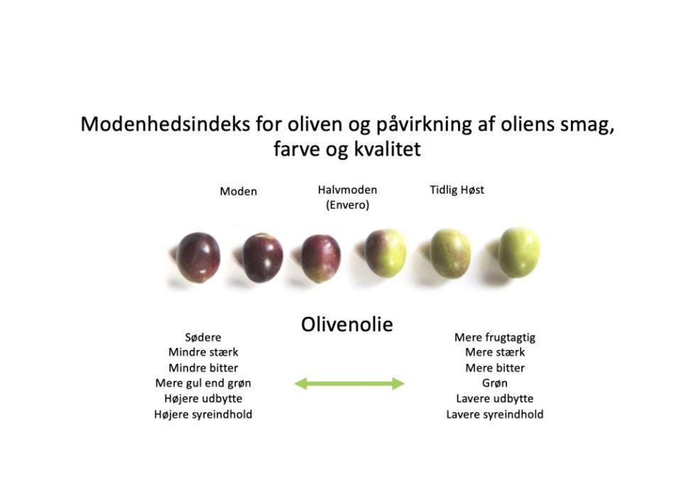 Modenhedsindeks for oliven og påvirkning af oliens smag, farve og kvalitet