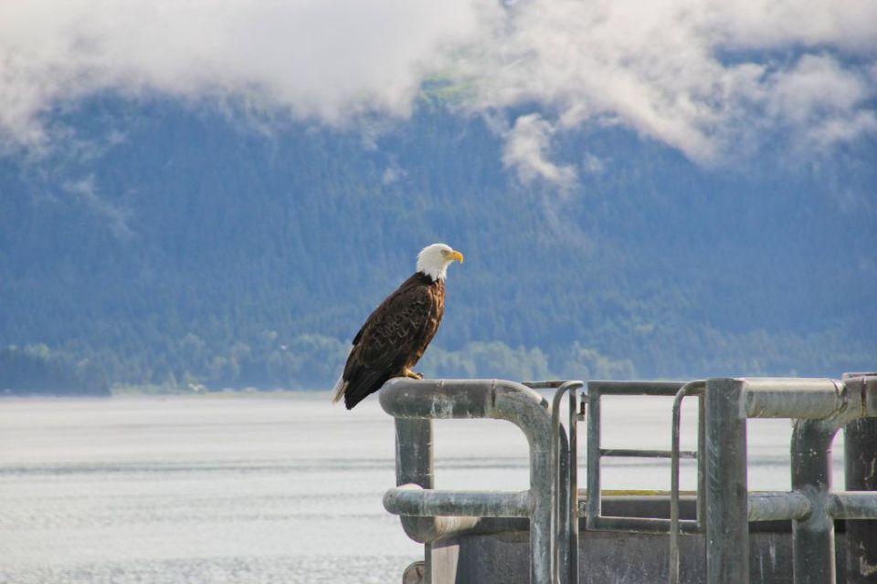 Rosas Reisen Reiseblog Kanada Alaska Roadtrip Seward Adler