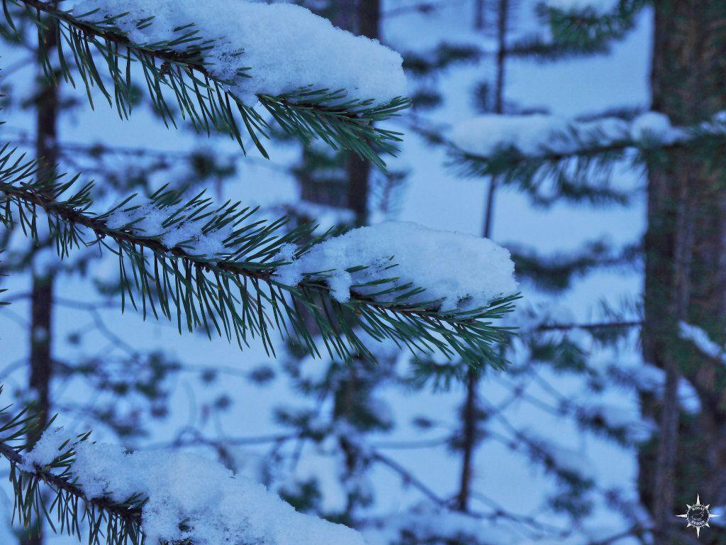 Finnland Langlaufski Winter Schnee