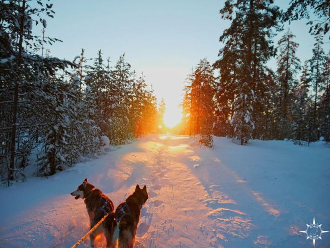 sonnenaufgang-schlittenhunde-arktis-polarnacht