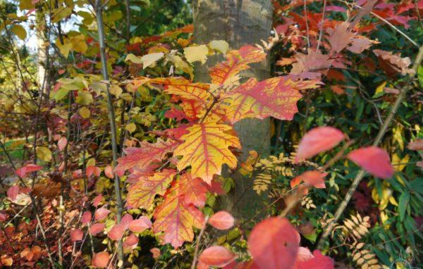 Herbst Köln Brück