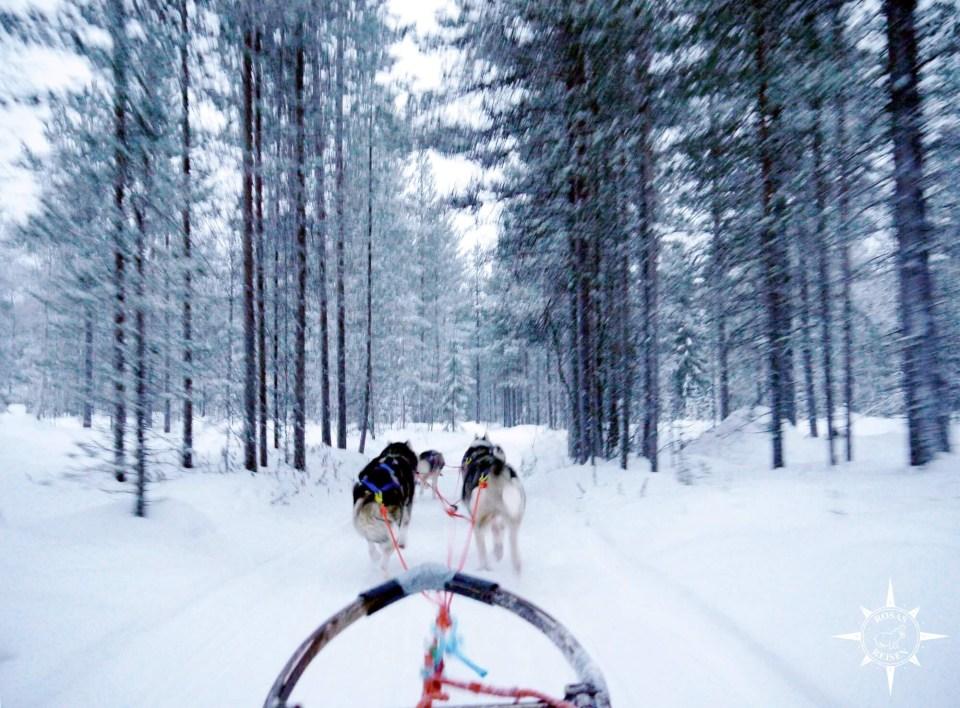 Rosas-Reisen-Reiseblog-Farmstay-Finnland-Schlittenhunde-Arktis-Huskys