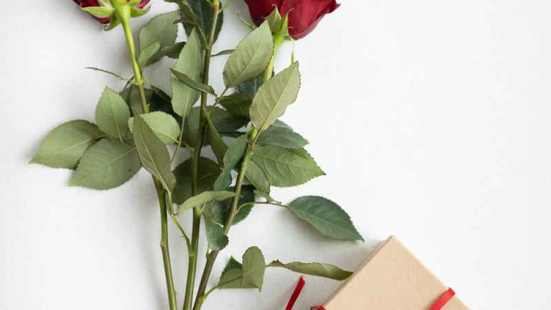 5 Best Valentines Day Gift For Her