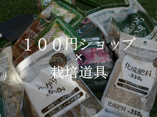 当サイトのコンテンツ「100均で買えるバラの栽培道具。おススメと不向きなアイテムは?」のアイキャッチ画像