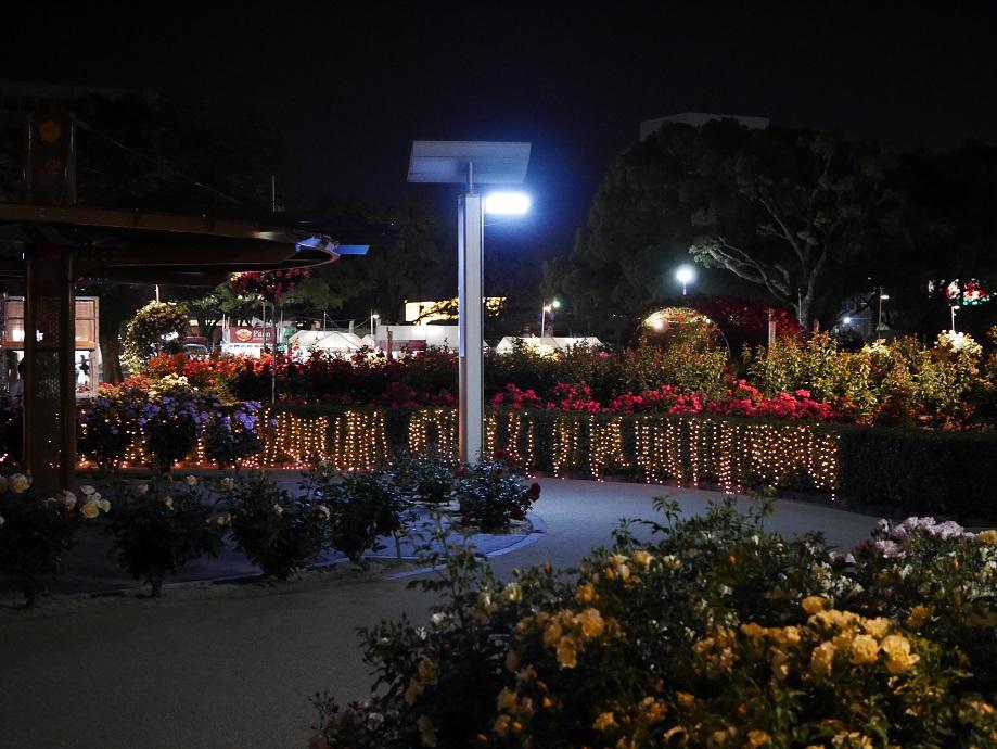 ライトアップされた福山市ばら公園内の中心付近の写真