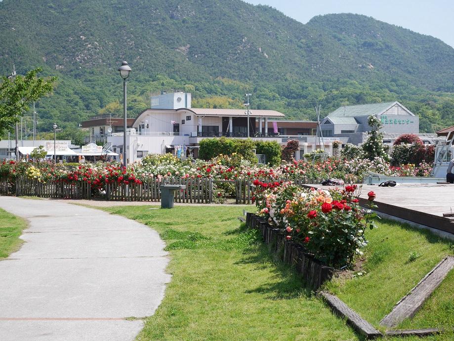 吉海町にある「よしうみバラ公園」を撮影した写真。
