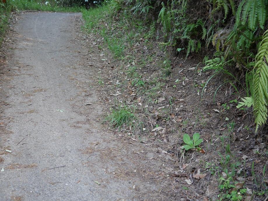 山道の遊歩道の端の落ち葉を拾って清掃が完了した状態