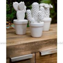 Cactus blancs