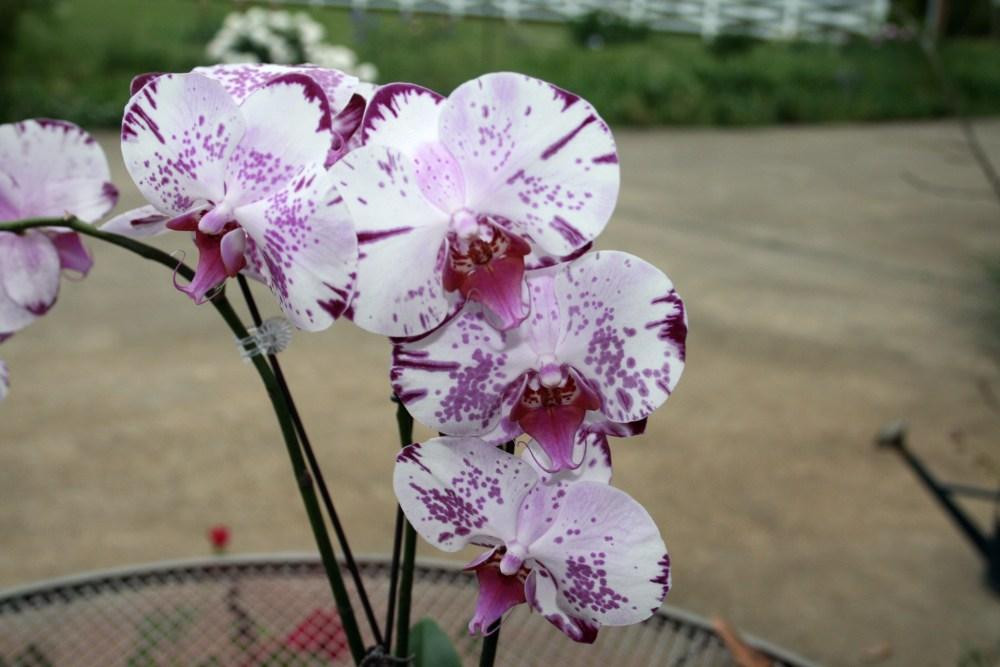Orchids (4/4)