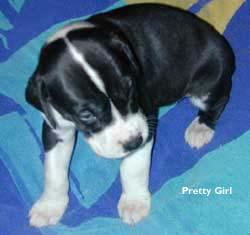 Pretty Girl pup