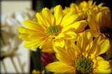 My Yellow Flowers´¯`•.¸¸.• ♥L❀VE ♥´¯`•