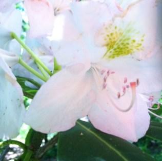 Fair flowers at the Arboretum