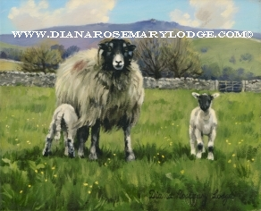 Yorkshire Dales paintings of sheep by Rosemary Lodge