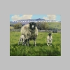 Swaledale Ewe With Lambs_t