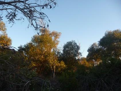 Urban Bushland Perth