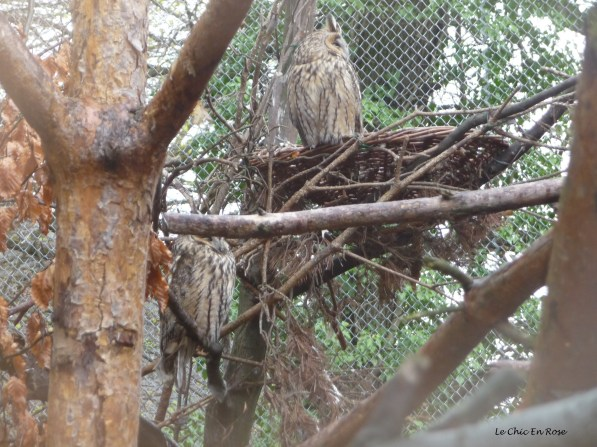 Owls at Innsbruck Alpenzoo