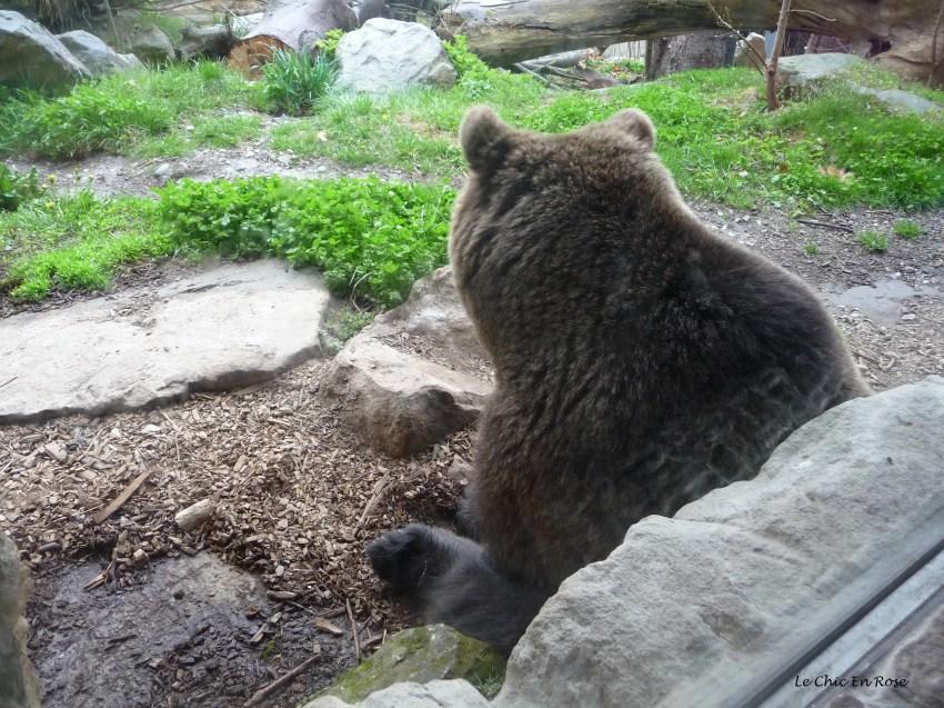 Brown bear enclosure Alpenzoo Innsbruck