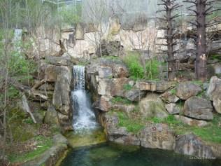 Waterfall bear enclosure