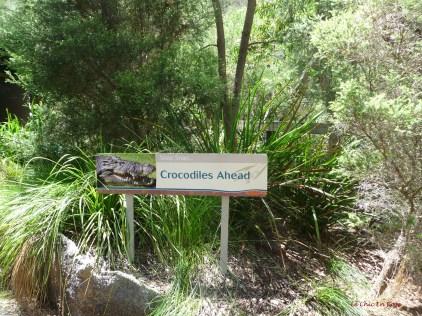 Warning Crocodile Ahead!