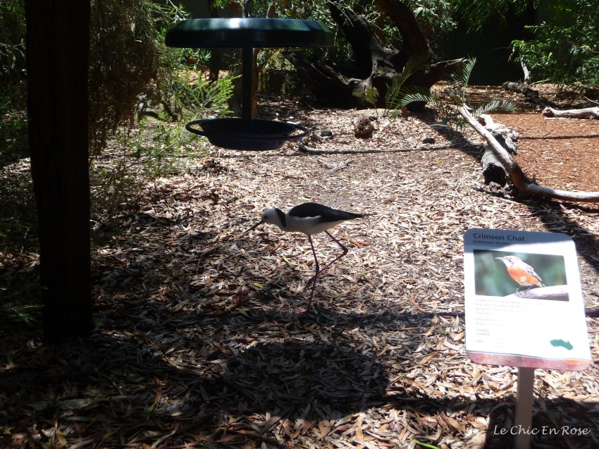 Native Australian bird enclosure. La Petite was fascinated by the birds and we spent quite a bit of time in here!
