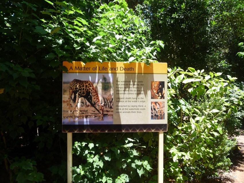 African Savannah Information Board