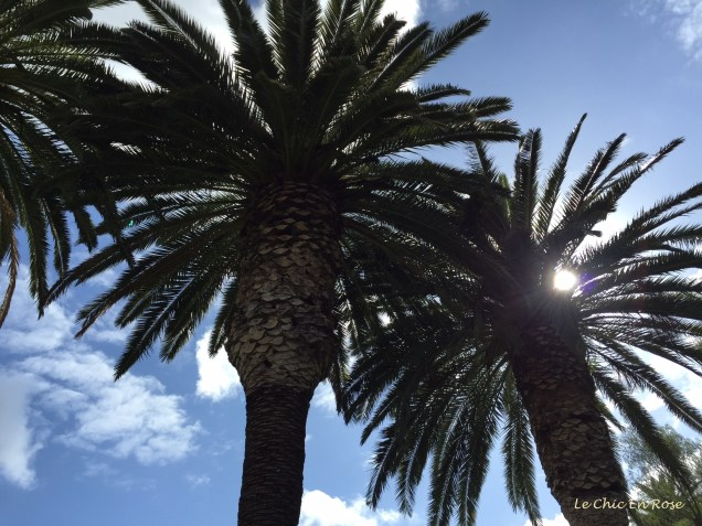 "Monsieur Le Chic's shot of palm trees, which he feels resembles the opening sequence of ""Miami Vice""!"