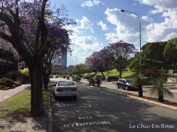 Jacaranda lined avenue Parliament Place Perth