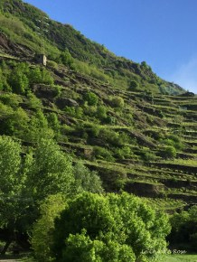 Vines On the Steeply Sloping Hillside