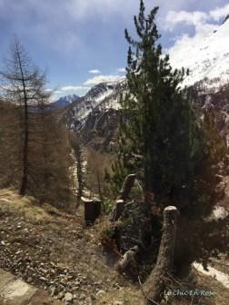 Alpine Scenery Bernina Pass