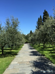 Tree Lined Avenues Piona Abbey