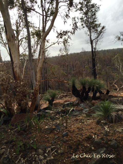 Forest Near Dwellingup