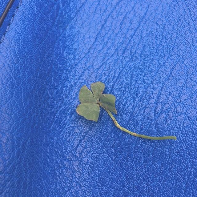 Te regalo un trébol de cuatro hojas :)) #sébuena