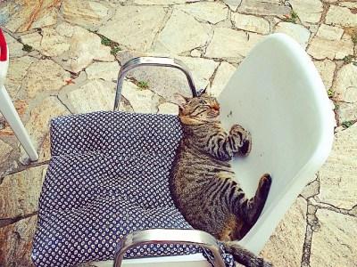 Lindo gatito que también estuvo bailando ayer en la fiesta de #FDG2014 ;))