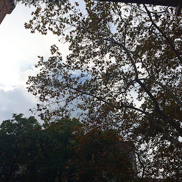 cielo entre las hojas plaça de la vila barcelona