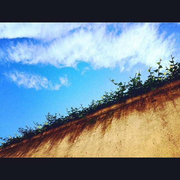 muro ribeteado de enredaderas barcelona