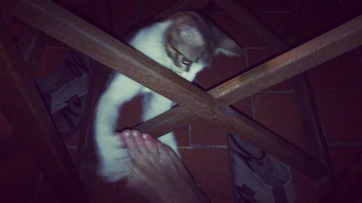 Fiesta del lindo gatito y un pie ;))