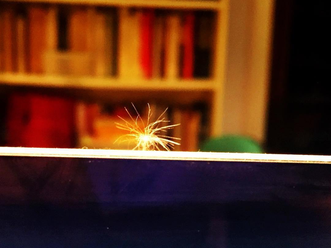 Magia es que la cipsela de un Diente de León se pose sobre tu ordenador mientras escribes. Feliz con estas ayudas para mi #novela2017 :))