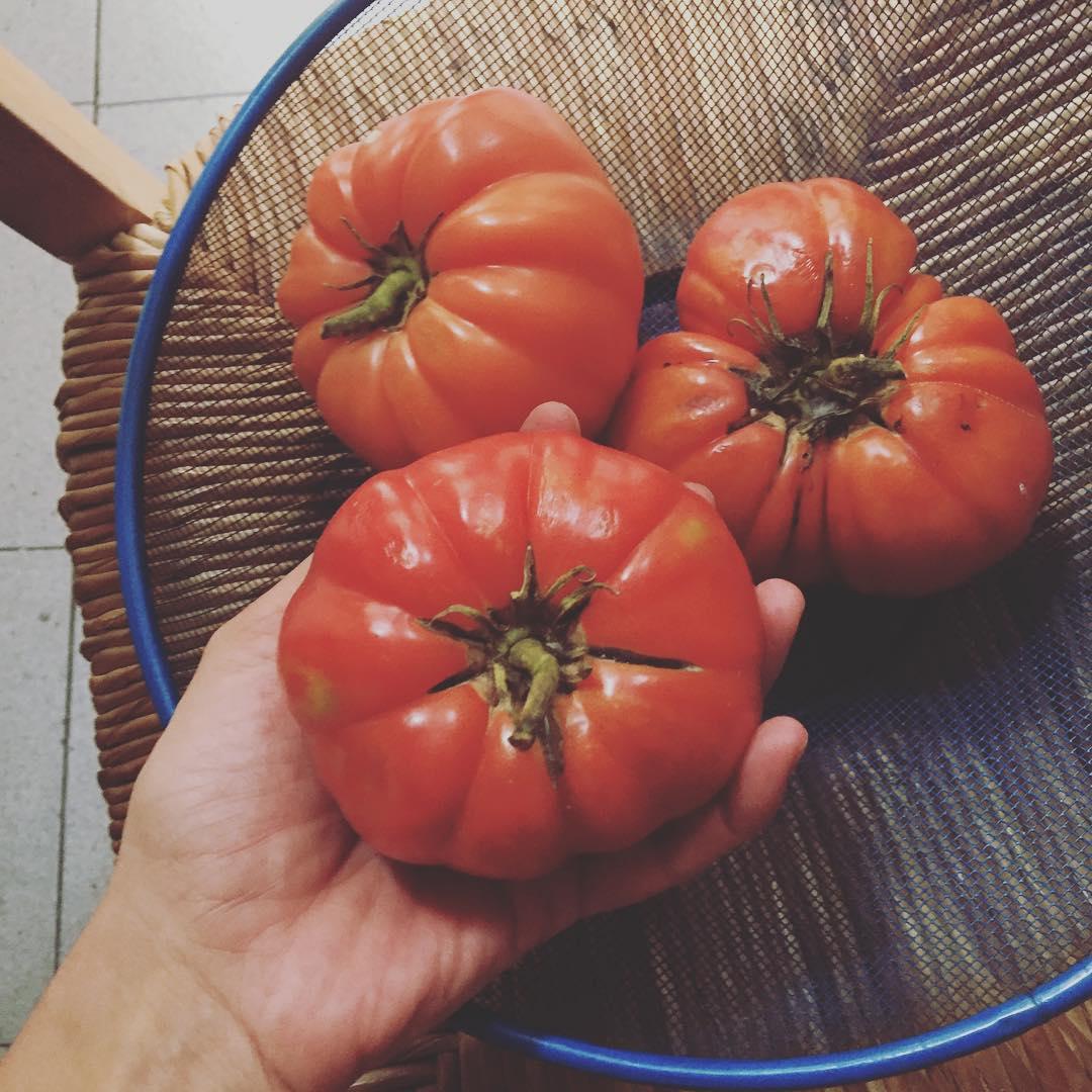 #cordebou o #tomatebarbastro ?