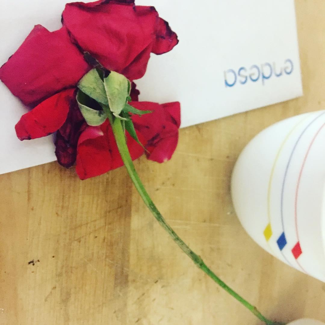 Qué misterio tan romántico: he encontrado esta #rosa en mi buzón, junto con el correo comercial y las facturas :))
