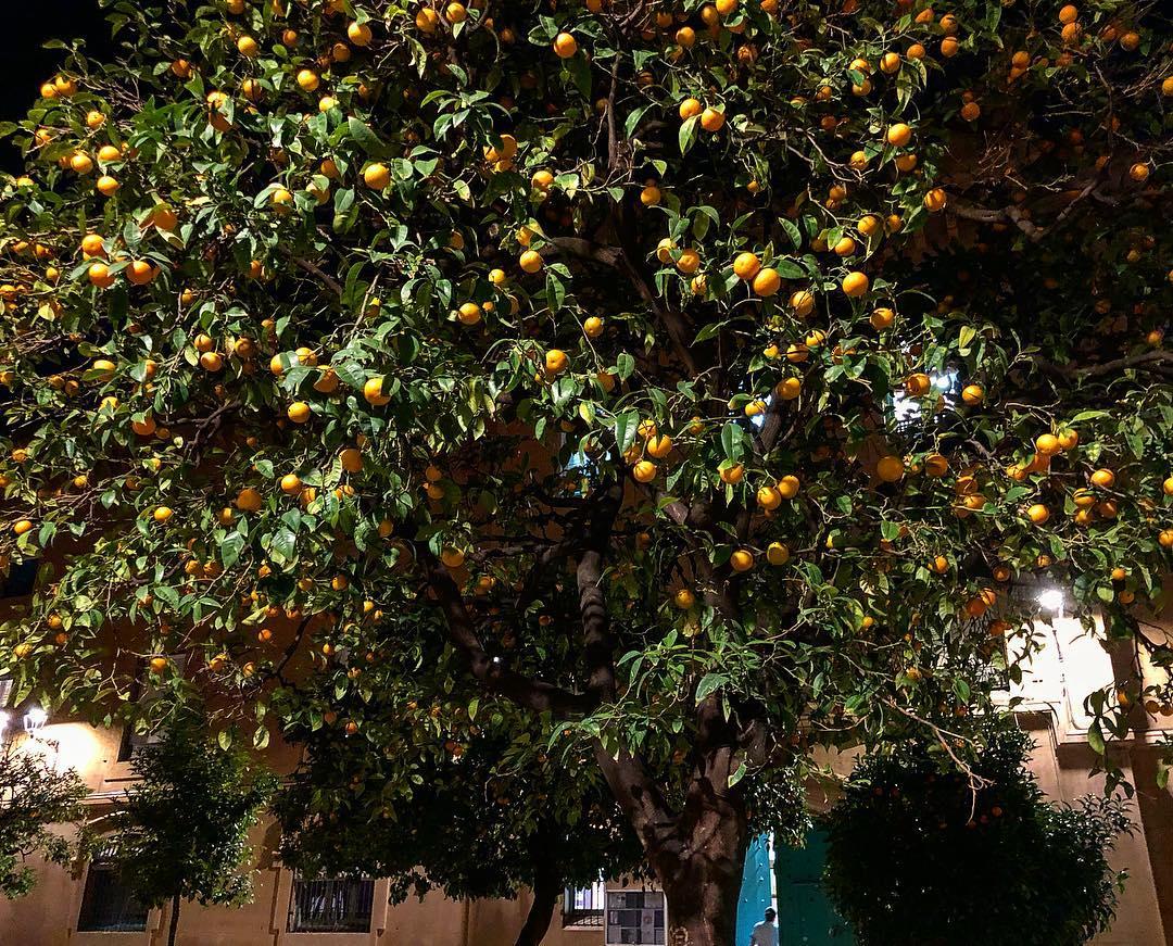Naranjas de la China ;))