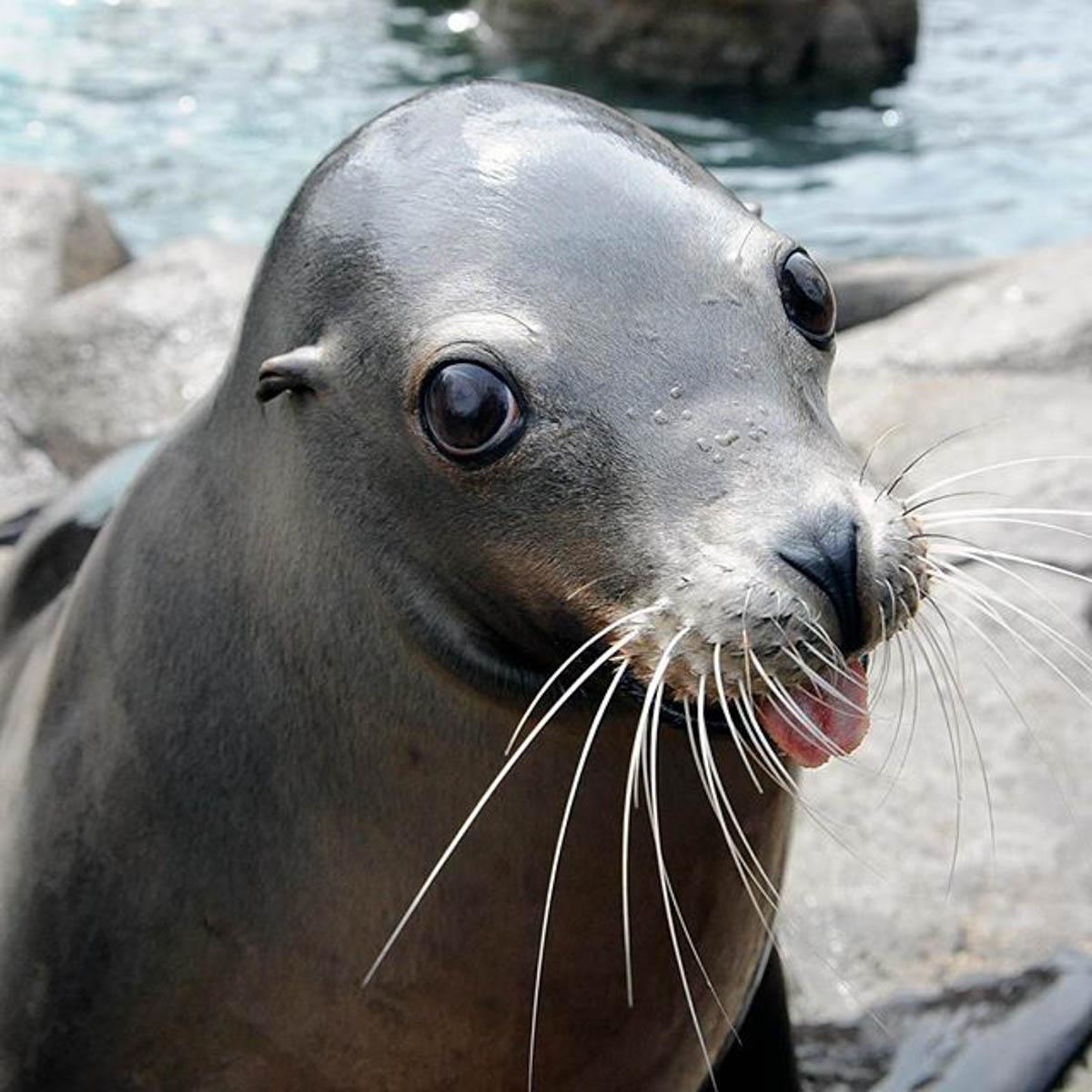 Sea Lion hamming it up