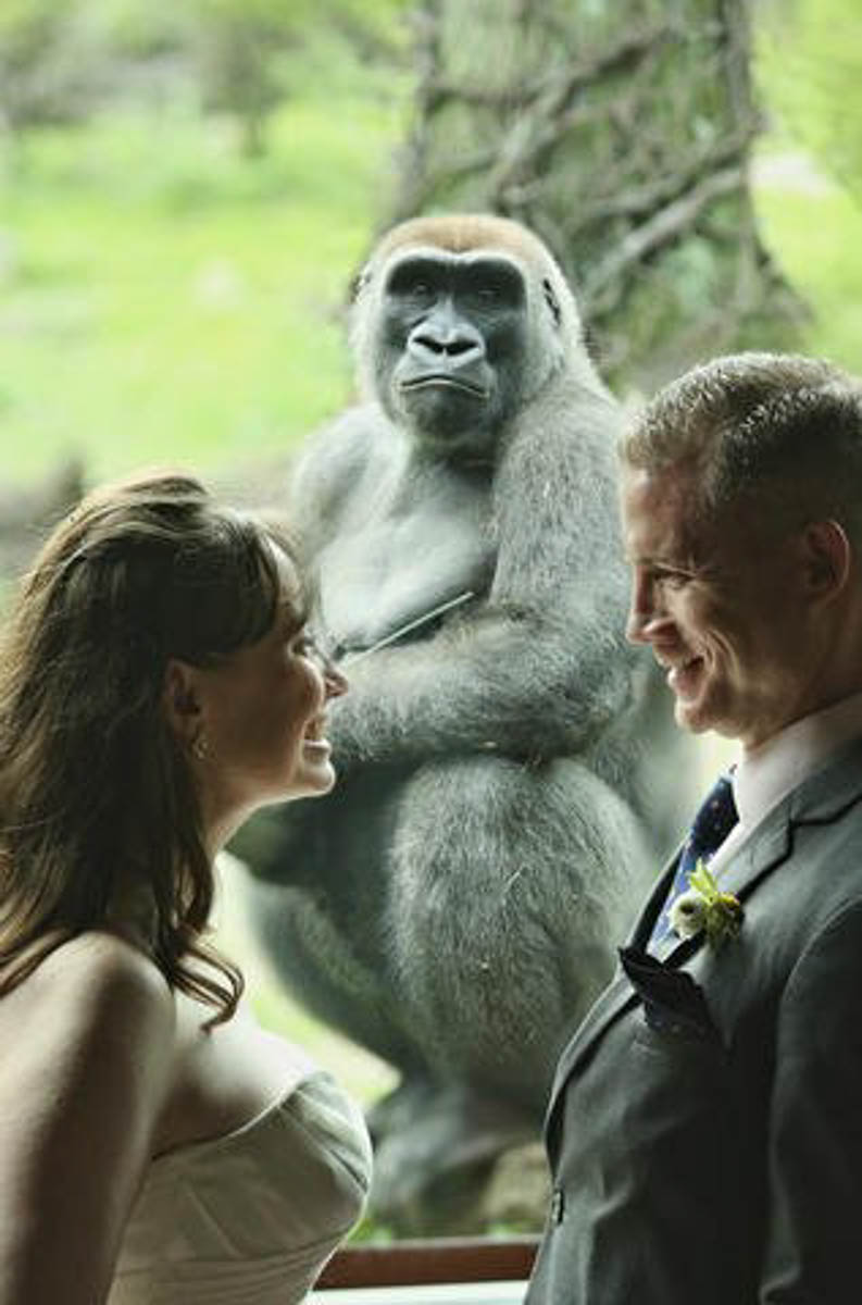 Wedding at the Bronx Zoo