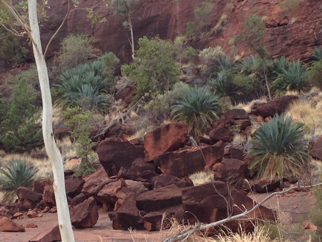 Cycad Gorge, Northern Territory