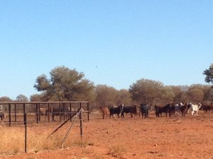 Cattle Station near Alice Springs
